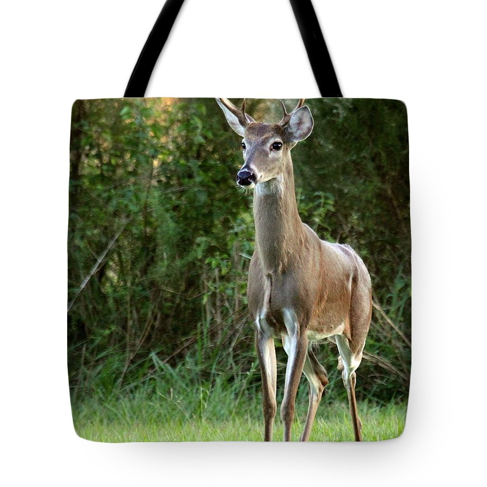 Deer Tote Bag featuring the photograph Buck In The Meadow by Myrna Bradshaw