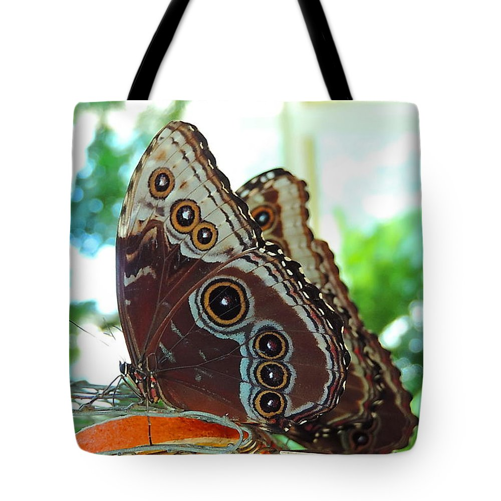 I Found This Lovely Buckeye Butterfly Tote Bag featuring the photograph Buckeye Butterfly by Roe Rader