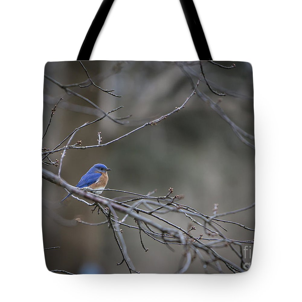 Bird Tote Bag featuring the photograph Budding Bluebird by Brad Marzolf Photography