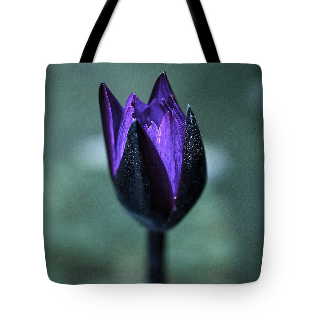 Nature Tote Bag featuring the photograph Budding Water Lily by Darby Donaho