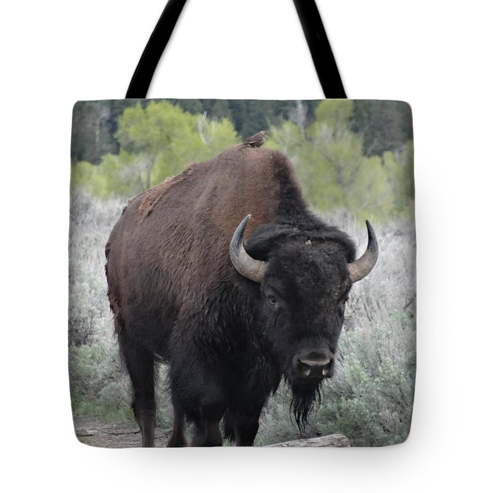 Buffalo Photographs Tote Bag featuring the photograph Buffalo Bird by Dan Sproul