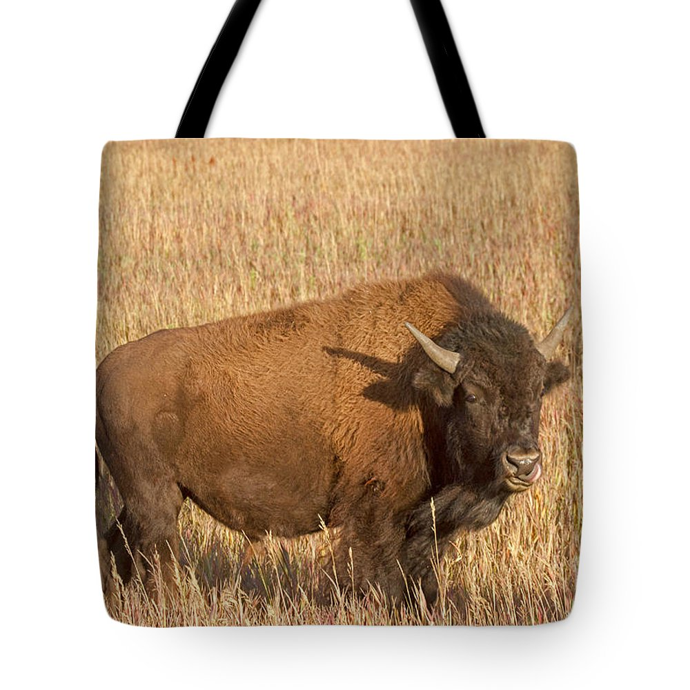 Animal Tote Bag featuring the photograph Bull Bison At The Elk Ranch Grand Teton National Park by Fred Stearns