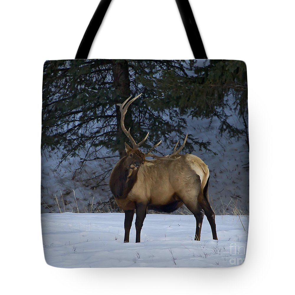 Elk Tote Bag featuring the photograph Bull Elk  #9923 by J L Woody Wooden