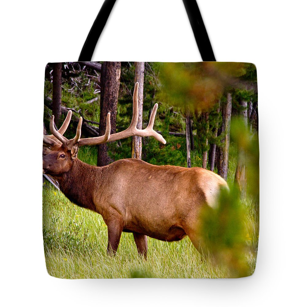 Elk Tote Bag featuring the photograph Bull Elk by Bill Gallagher