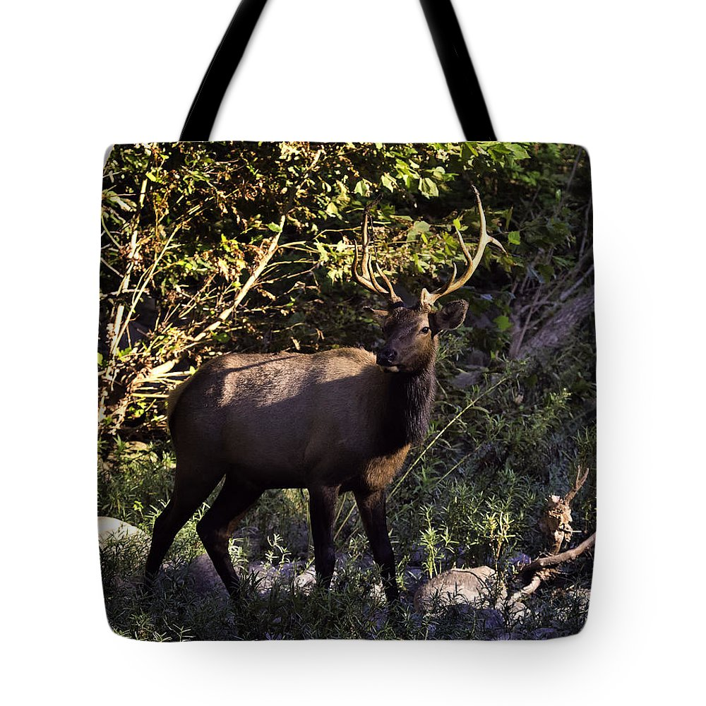 Bull Elk Tote Bag featuring the photograph Bull Elk Crossing The Hailstone by Michael Dougherty