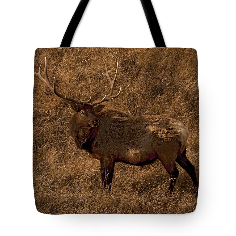 Elk Tote Bag featuring the photograph Bull Elk In Evening Light by J L Woody Wooden
