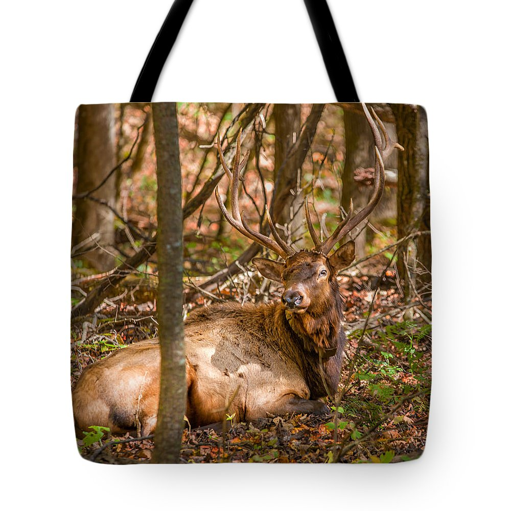 Bull Elk In Chataloocheetn. Tote Bag featuring the photograph Bull Moose by Bobby Hicks