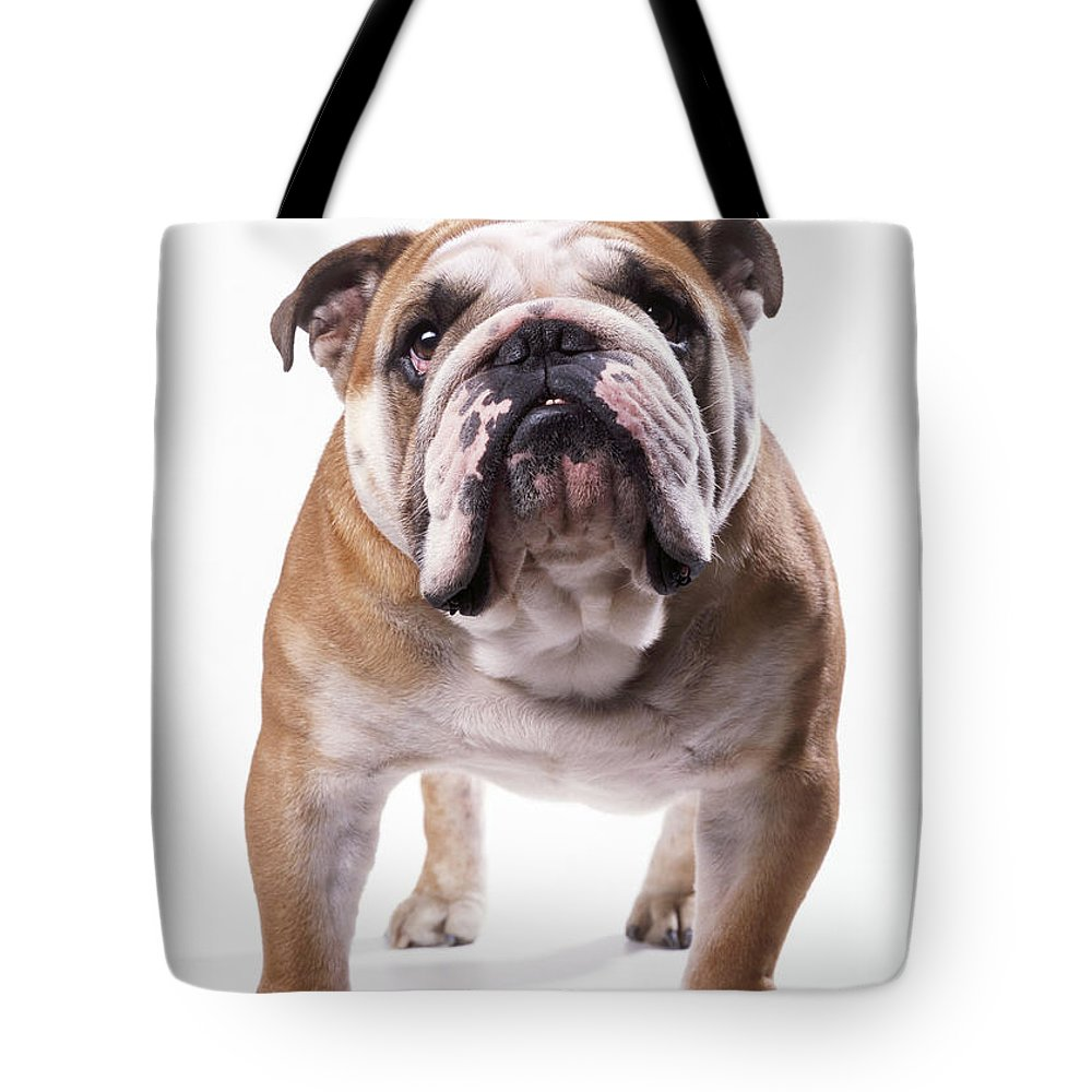 Bulldog Tote Bag featuring the photograph Bulldog Standing, Facing Camera by John Daniels