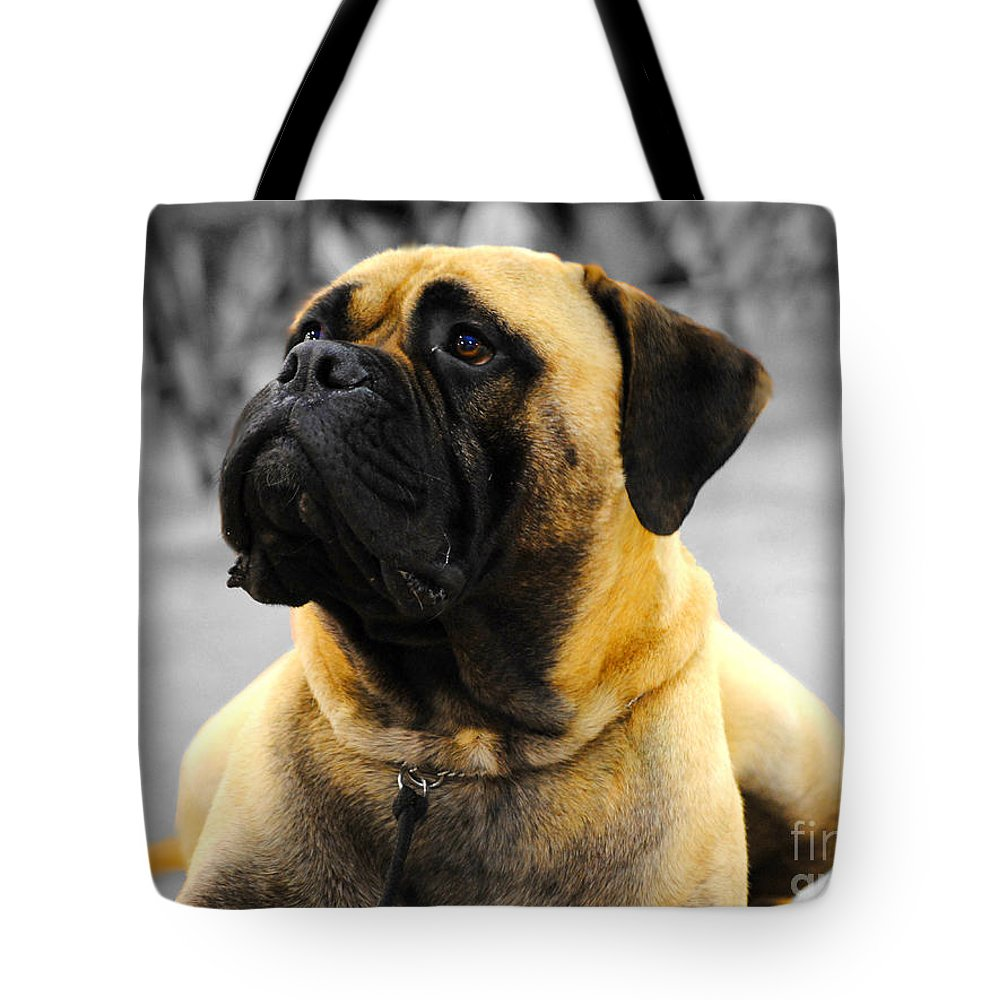 Bullmastiff Tote Bag featuring the photograph Bullmastiff by Jai Johnson