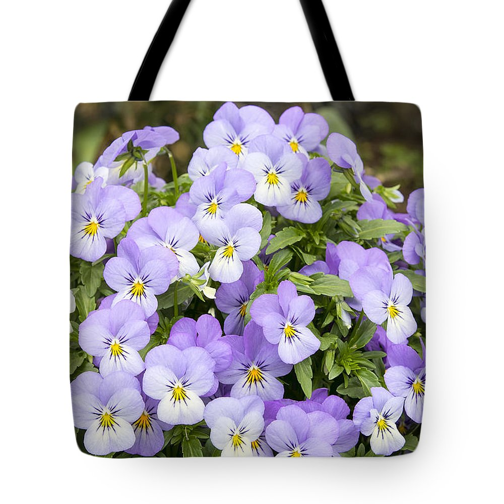 Pansy Tote Bag featuring the photograph Bunch Of Pansy Flowers by Jit Lim