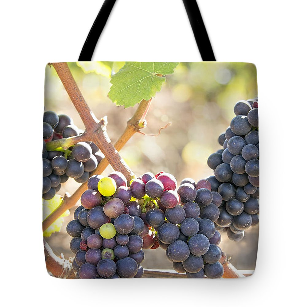 Bunches Tote Bag featuring the photograph Bunches Of Red Wine Grapes Hanging On Grapevine by Jit Lim