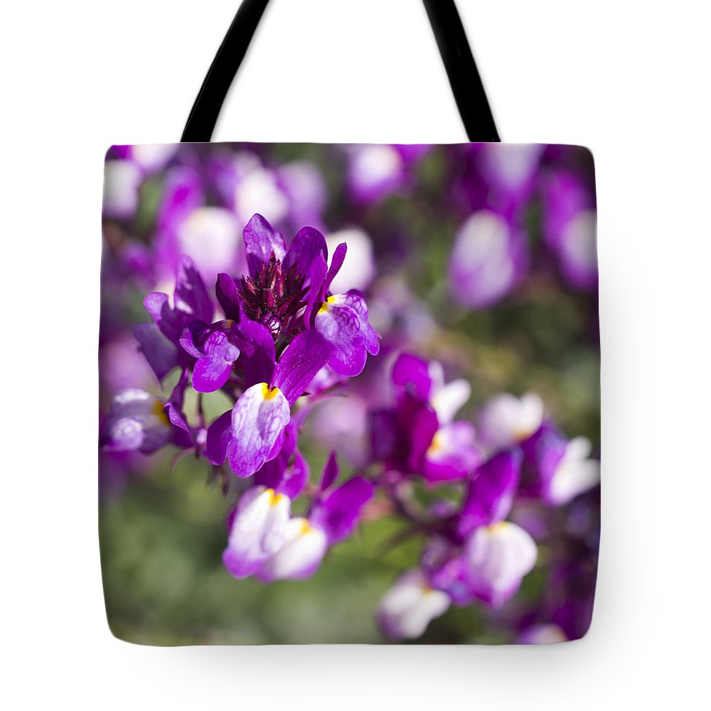 Tote Bag featuring the photograph Burst Of Blossoms by Priya Ghose