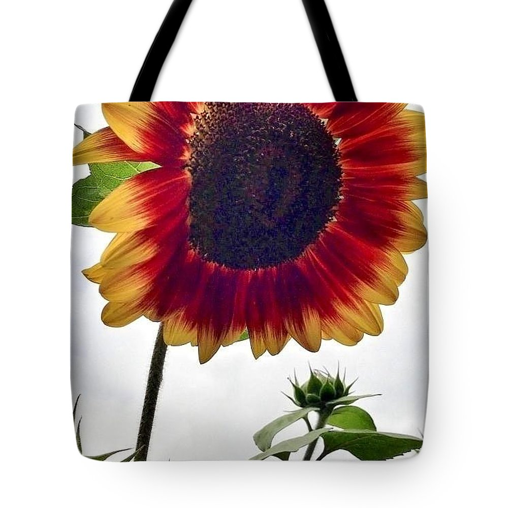 Red Sunflower Tote Bag featuring the photograph Burst Of Sunflower by Susan Garren