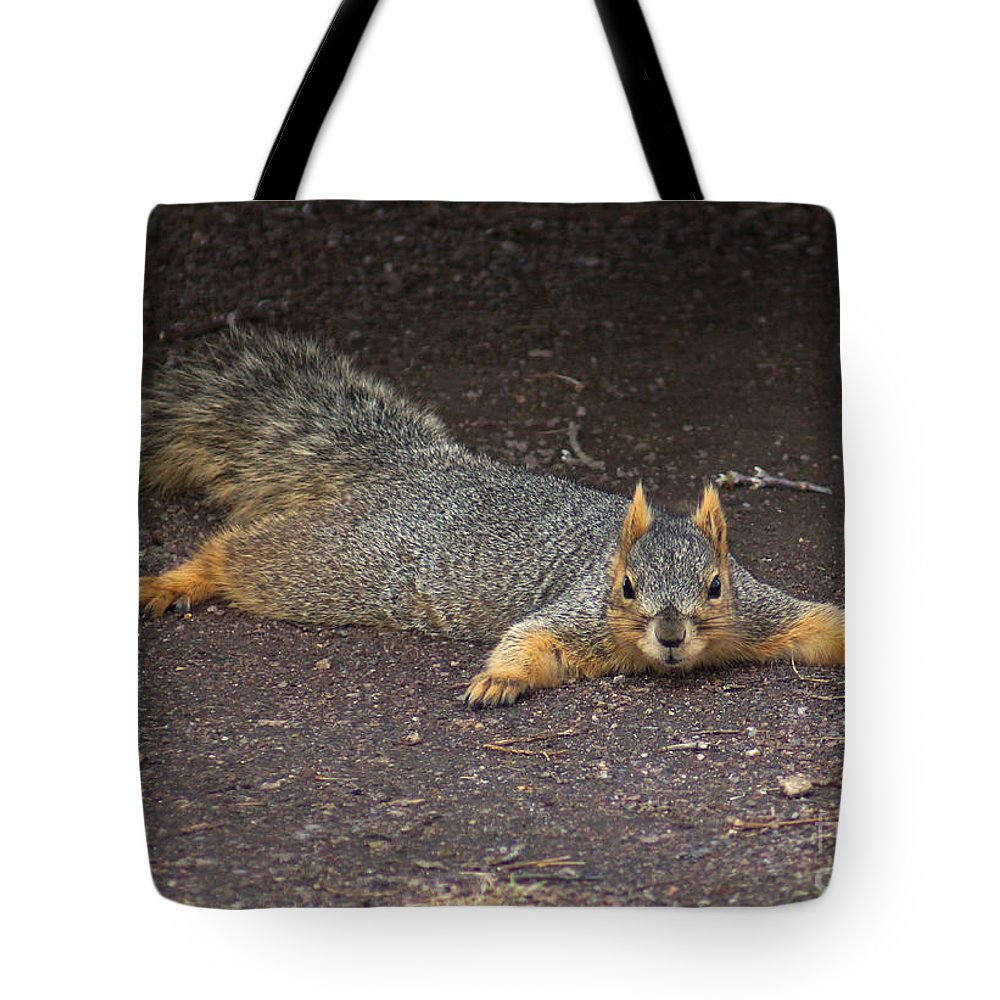 Squirrel Tote Bag featuring the photograph Busted by Lori Tordsen