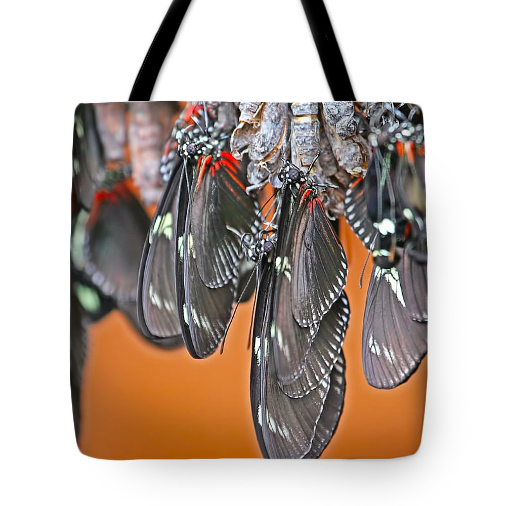 Butterfies Tote Bag featuring the photograph Butterflies And Cocoons by Peggy Collins