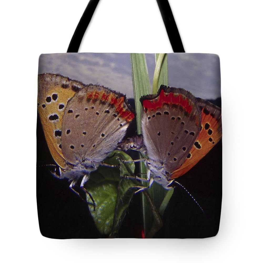Butterfly Tote Bag featuring the photograph Butterfly 001 by Ingrid Smith-Johnsen