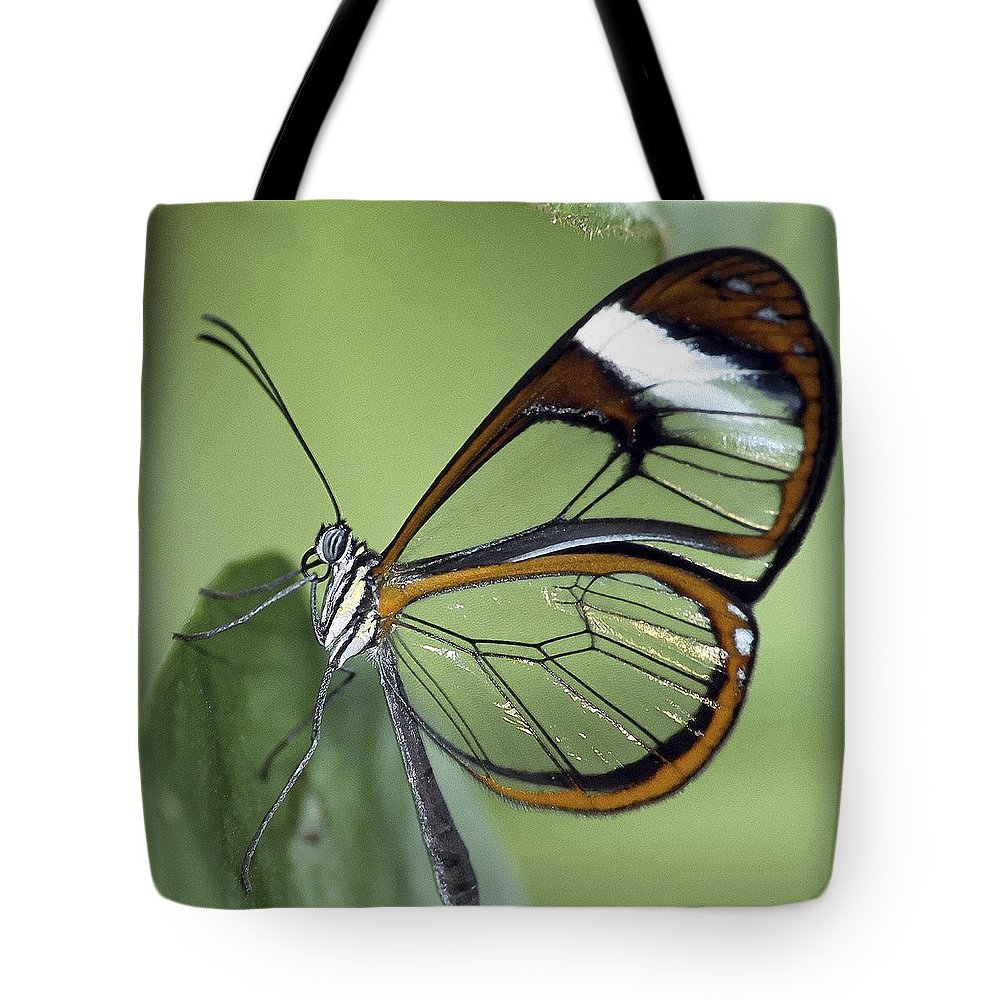 Butterfly Tote Bag featuring the photograph Butterfly 005 by Ingrid Smith-Johnsen