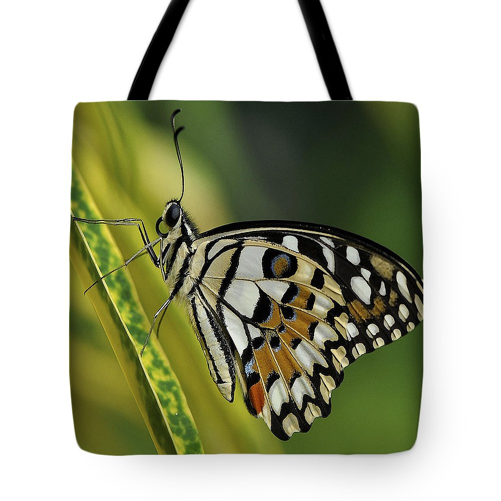 Butterfly Tote Bag featuring the photograph Butterfly 010 by Ingrid Smith-Johnsen