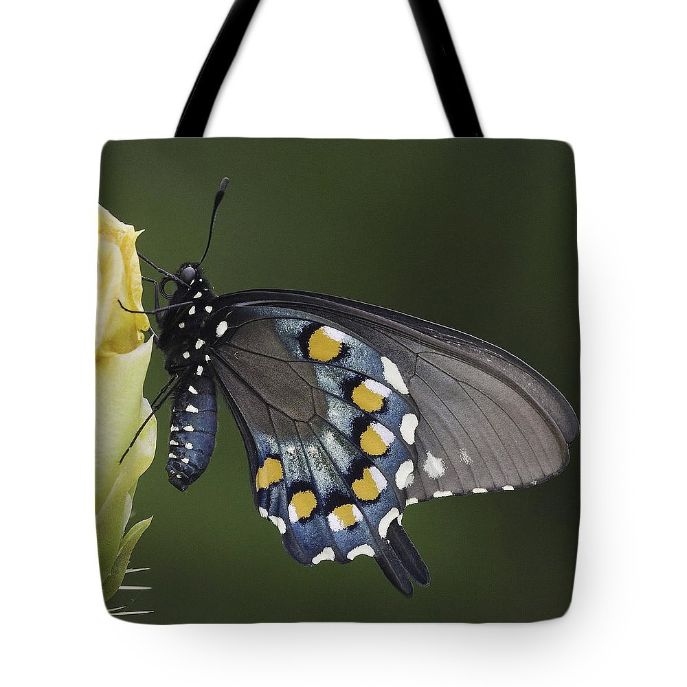 Butterfly Tote Bag featuring the photograph Butterfly 016 by Ingrid Smith-Johnsen