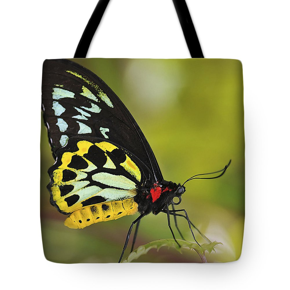 Butterfly Tote Bag featuring the photograph Butterfly 022 by Ingrid Smith-Johnsen