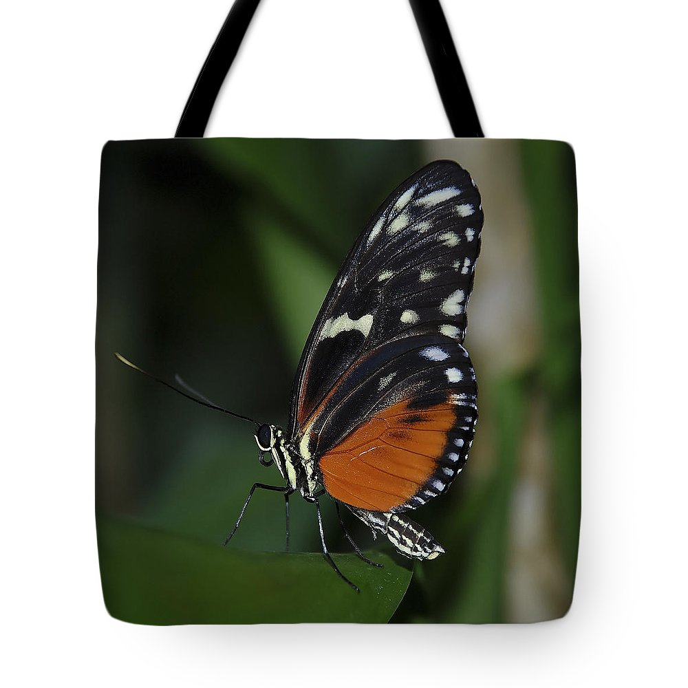 Butterfly Tote Bag featuring the photograph Butterfly 025 by Ingrid Smith-Johnsen