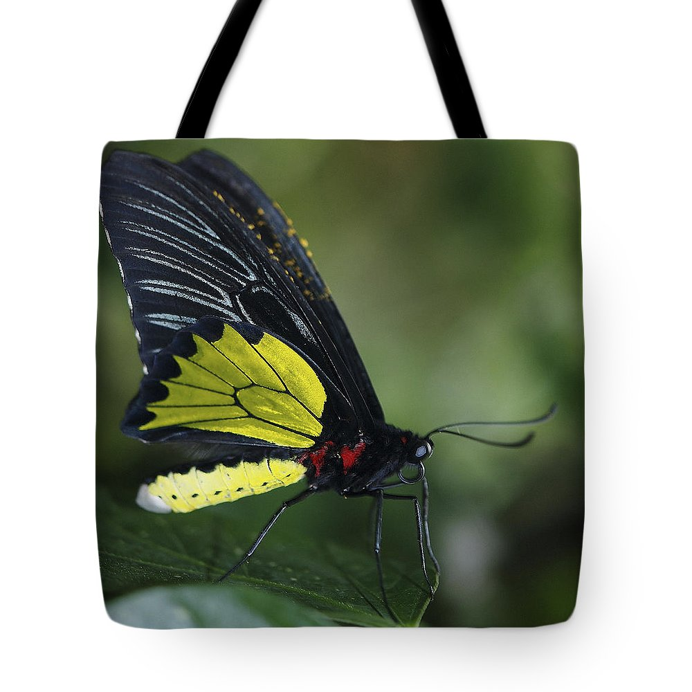 Swallowtail Tote Bag featuring the photograph Butterfly 029 by Ingrid Smith-Johnsen