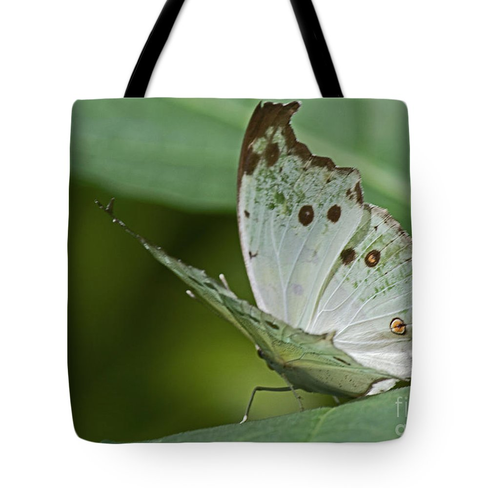 Sandra Clark Tote Bag featuring the photograph Butterfly Ready For Take Off by Sandra Clark