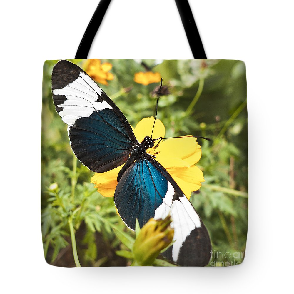 Heiko Tote Bag featuring the photograph Butterfly Sara Longwing by Heiko Koehrer-Wagner