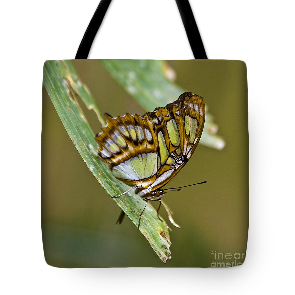 Butterfly Tote Bag featuring the photograph Butterfly Siproeta Stelenes by Heiko Koehrer-Wagner