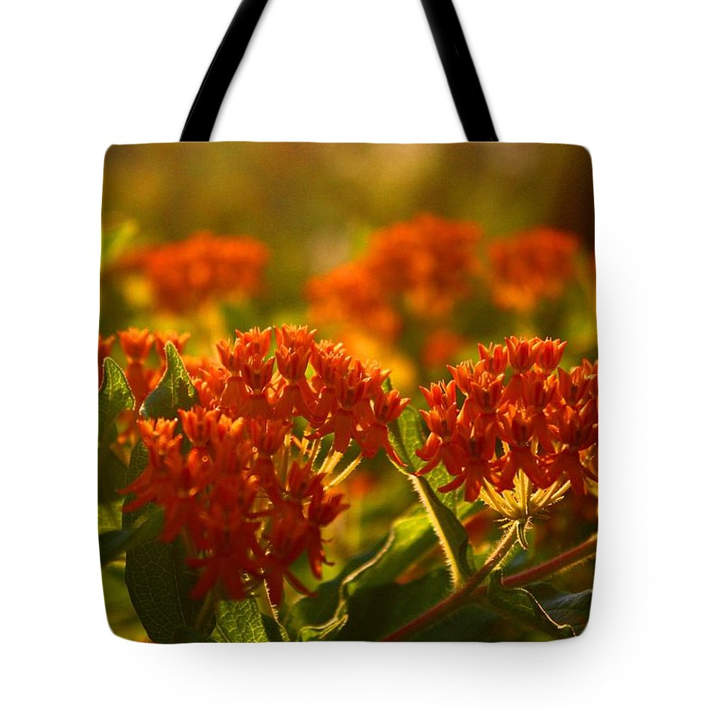 Butterfly Weed Tote Bag featuring the photograph Butterfly Weed In The Sunset by Kathryn Meyer
