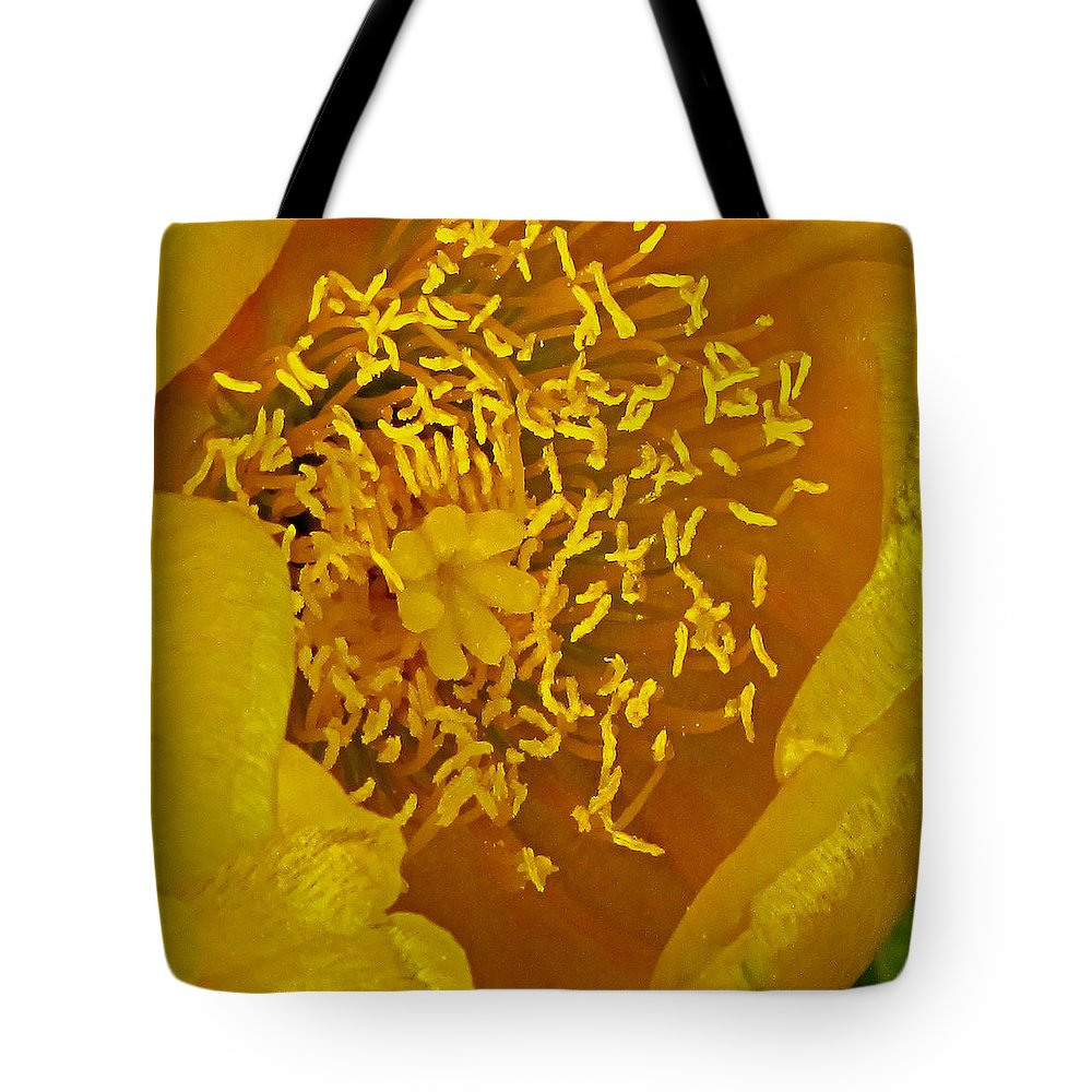 Cactus Tote Bag featuring the photograph Cactus 2 by Ingrid Smith-Johnsen