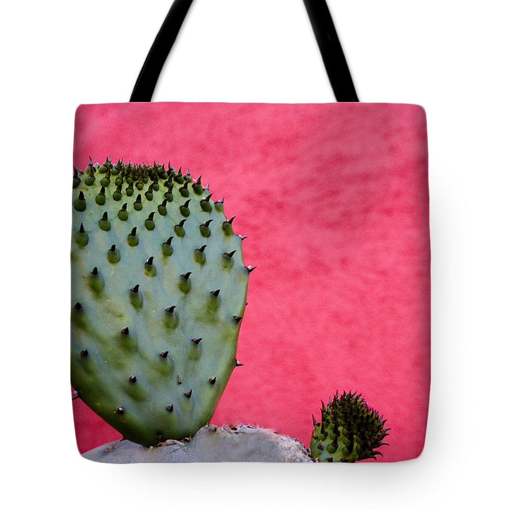 Cacti Lifestyle Products