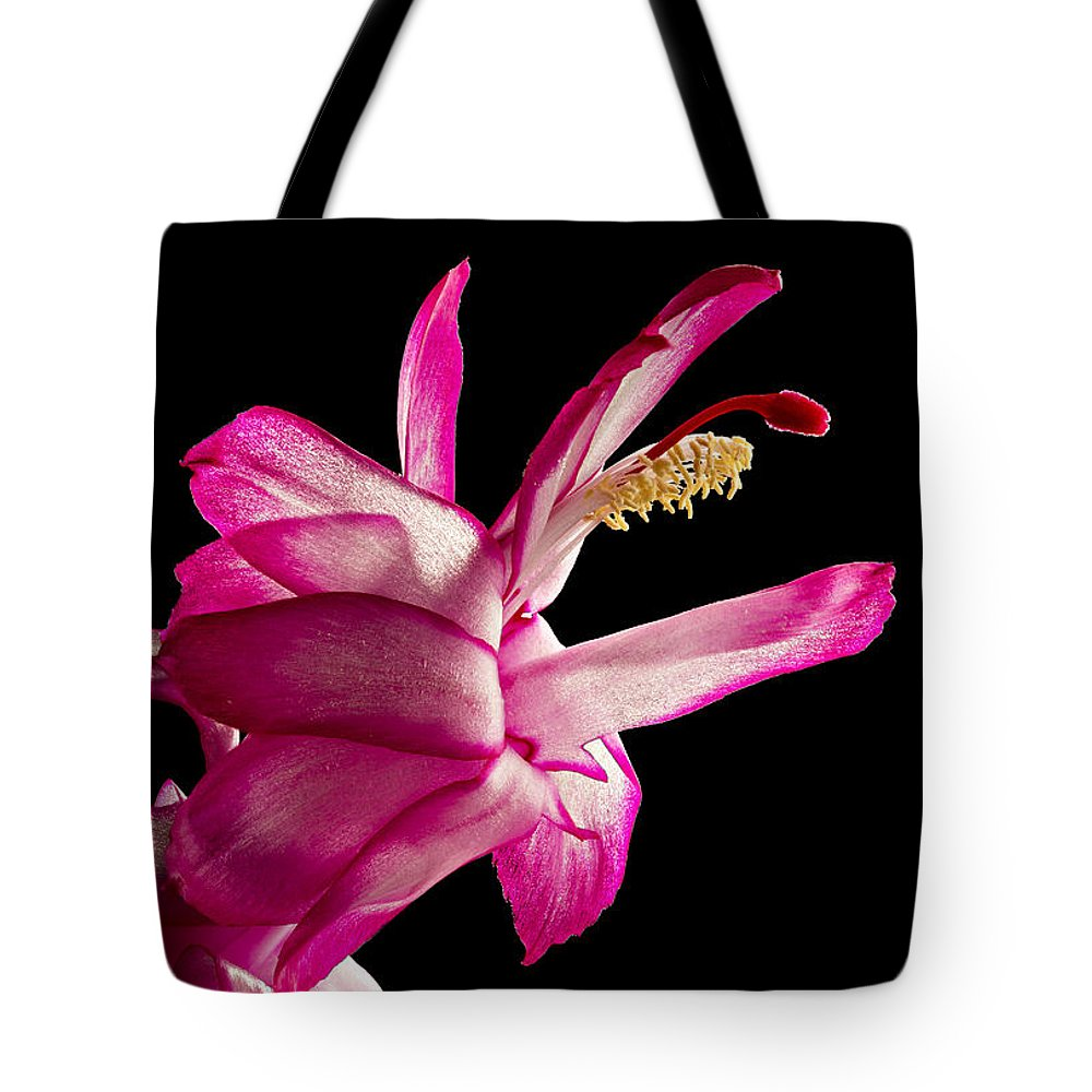 Designs Similar to Cactus Blossom by Mary Jo Allen