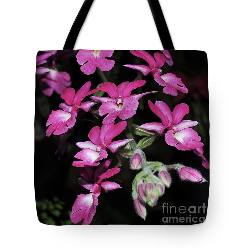Pink Orchid Tote Bag featuring the photograph Calanthe Rubens #1 Of 2 by Terri Winkler