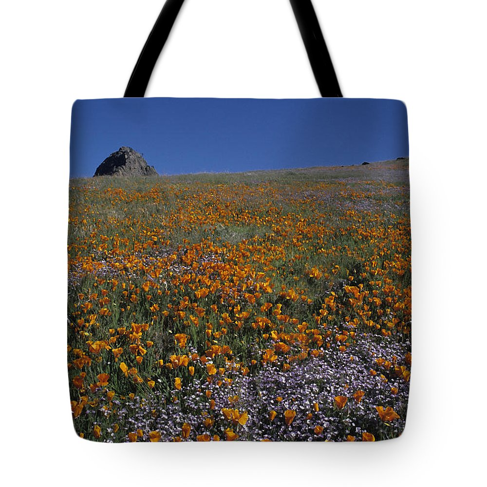Kern Tote Bag featuring the photograph California Gold Poppies And Baby Blue Eyes by Susan Rovira