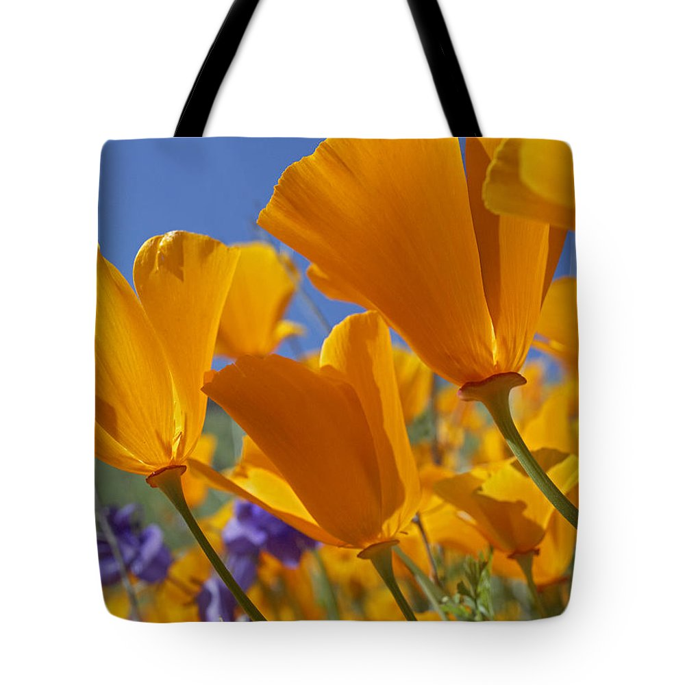 Antelope Valley Tote Bag featuring the photograph California Poppy Eschscholzia by Tim Fitzharris