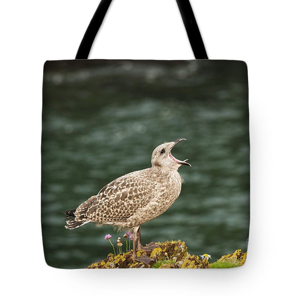 Adolescent Tote Bag featuring the photograph Calling For Food by Anne Gilbert