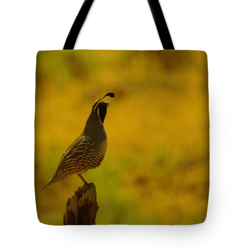 Rooster Quail Tote Bag featuring the photograph Calling For Girl Friends by Jeff Swan