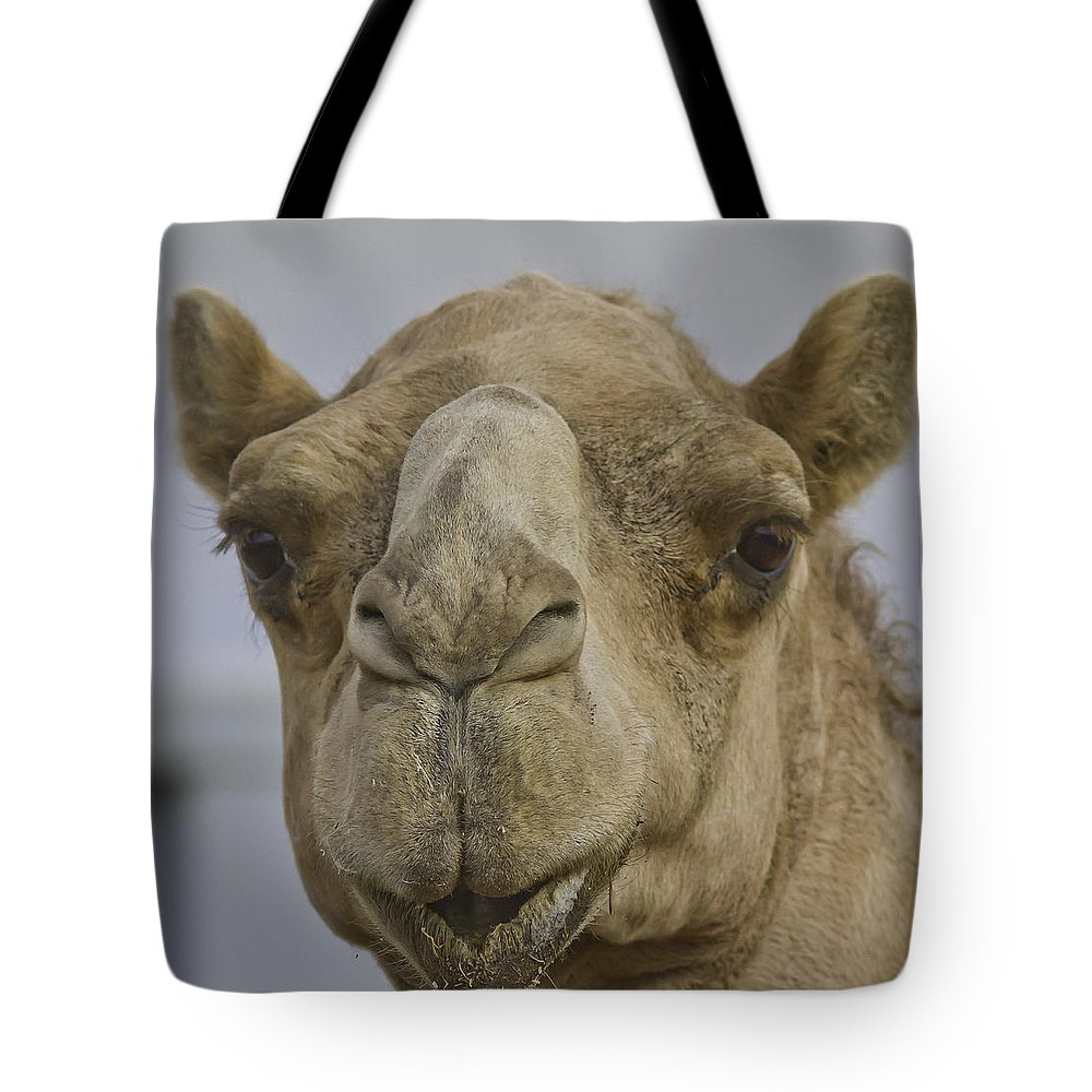 Wildlife Tote Bag featuring the photograph Camel by Brian Williamson