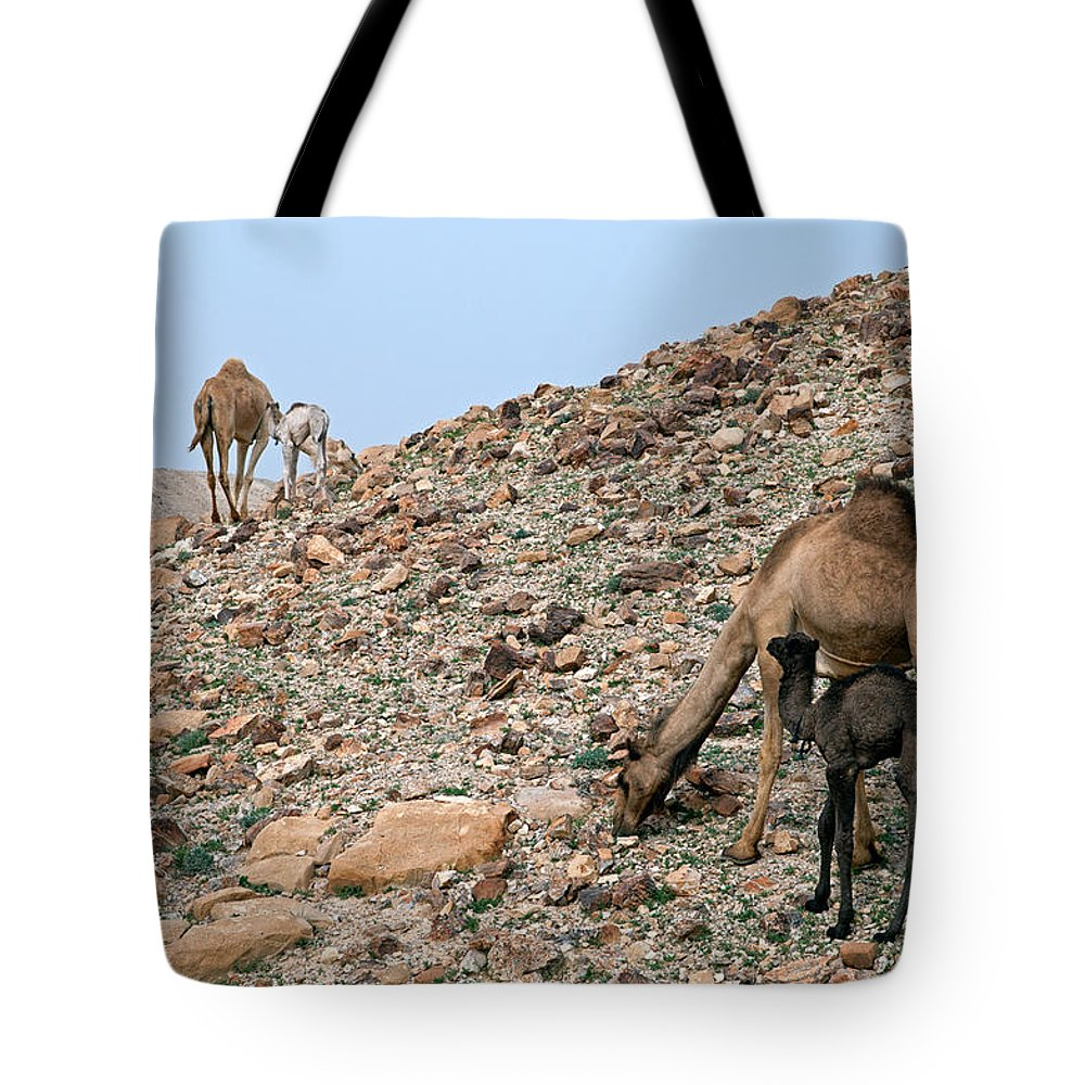 Camels Tote Bag featuring the photograph Camels At The Israel Desert -1 by Dubi Roman