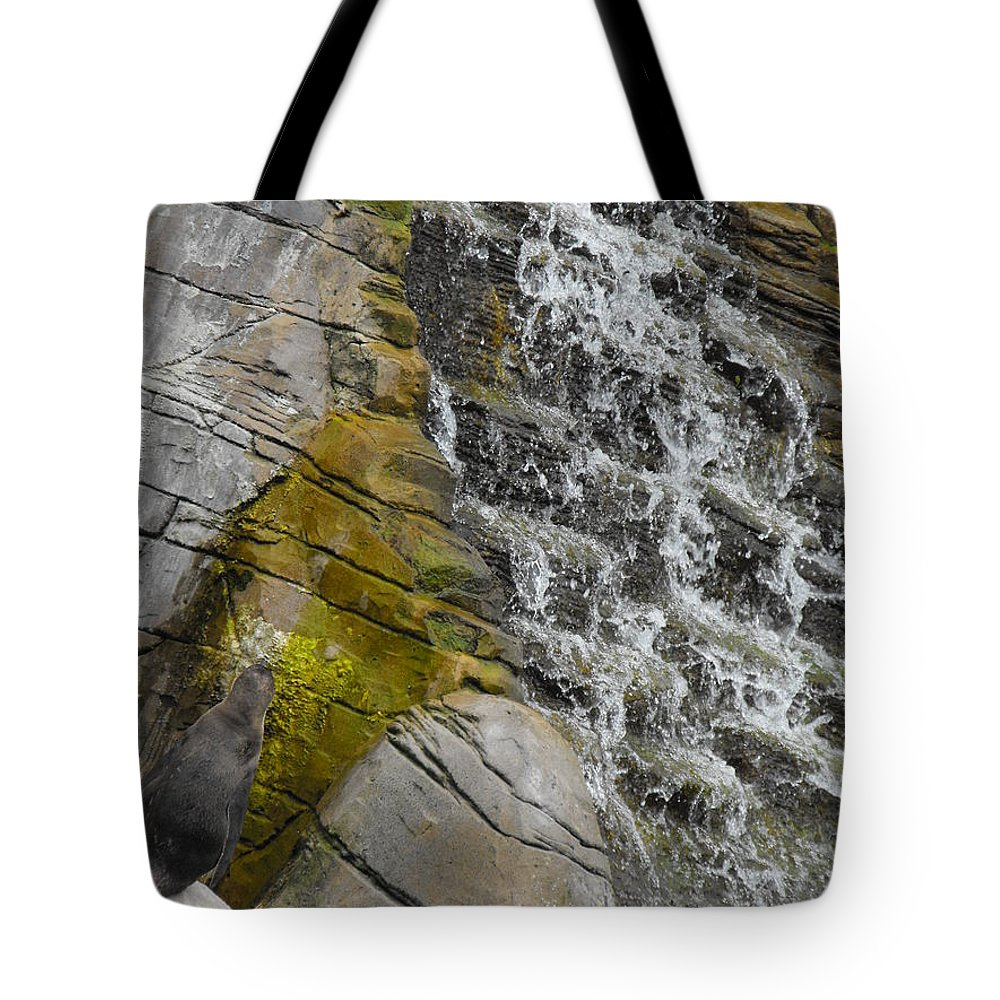 Penguin Tote Bag featuring the photograph Can I Get Up There by Perggals - Stacey Turner