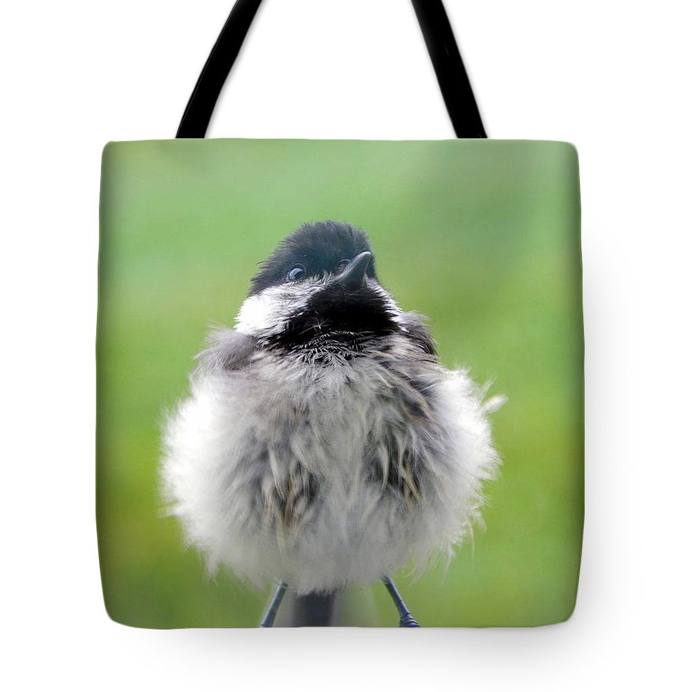 Close Encounters Of The Bird Kind Tote Bag featuring the photograph Close Encounters Of The Bird Kind by Karen Cook