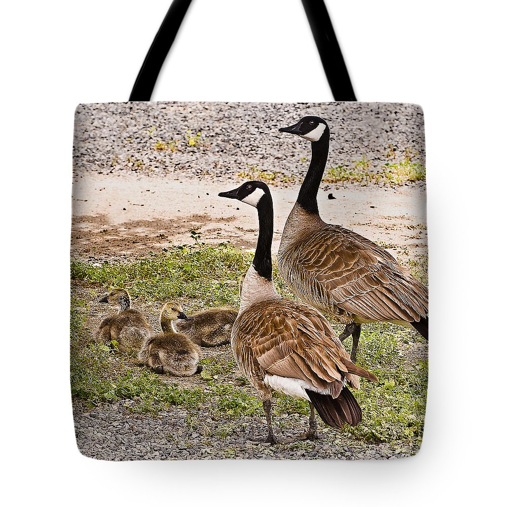 Bird Tote Bag featuring the photograph Canada Geese And Goslings by Bob and Nadine Johnston