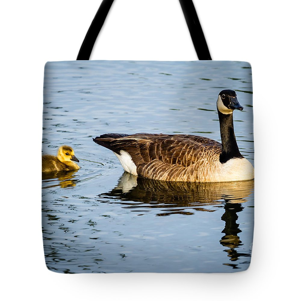 Canada Goose Tote Bag featuring the photograph Canada Goose And Gosling by Dawna Moore Photography