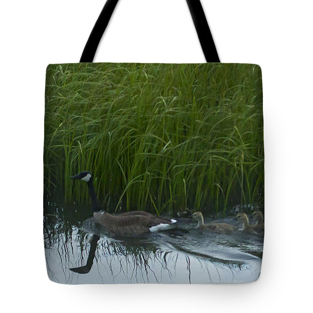 Canada Goose Tote Bag featuring the photograph Canada Goose Family  #7453 by J L Woody Wooden