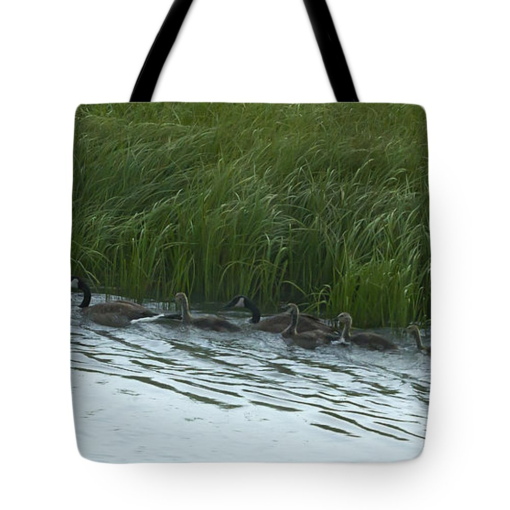 Canada Goose Tote Bag featuring the photograph Canada Goose Family  #7478 by J L Woody Wooden
