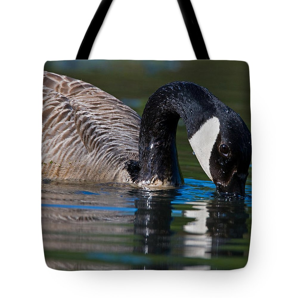 Animal Tote Bag featuring the photograph Canada Goose by Randall Ingalls
