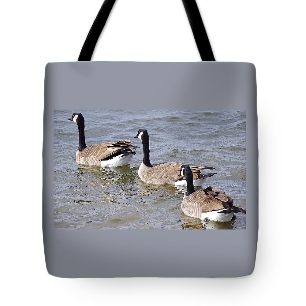 Canadian Geese Tote Bag featuring the photograph Canadian Trio by Mike and Sharon Mathews