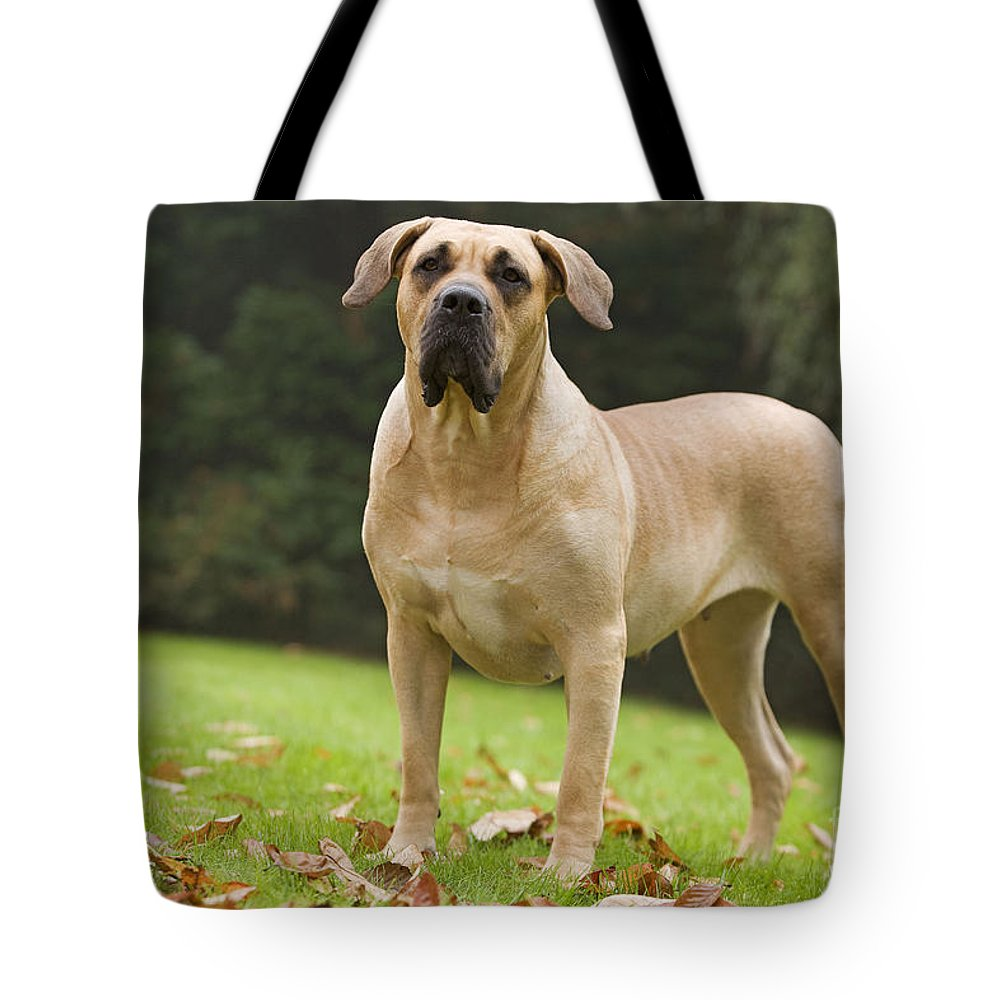 Canary Dog Tote Bag featuring the photograph Canary Dog by Jean-Michel Labat