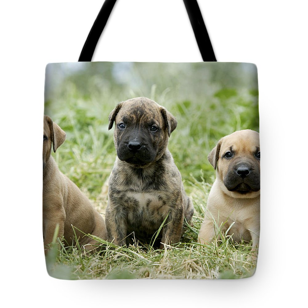 Canary Dog Tote Bag featuring the photograph Canary Dog Puppies by Jean-Michel Labat